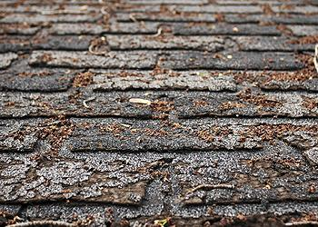 Total Roofing Solutions and Construction Images